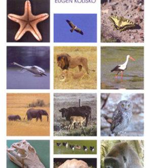 curso-de-zoologia